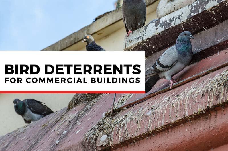 bird deterrents for commercial buildings